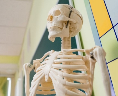 I nostri migliori modelli di scheletri anatomici del 2021